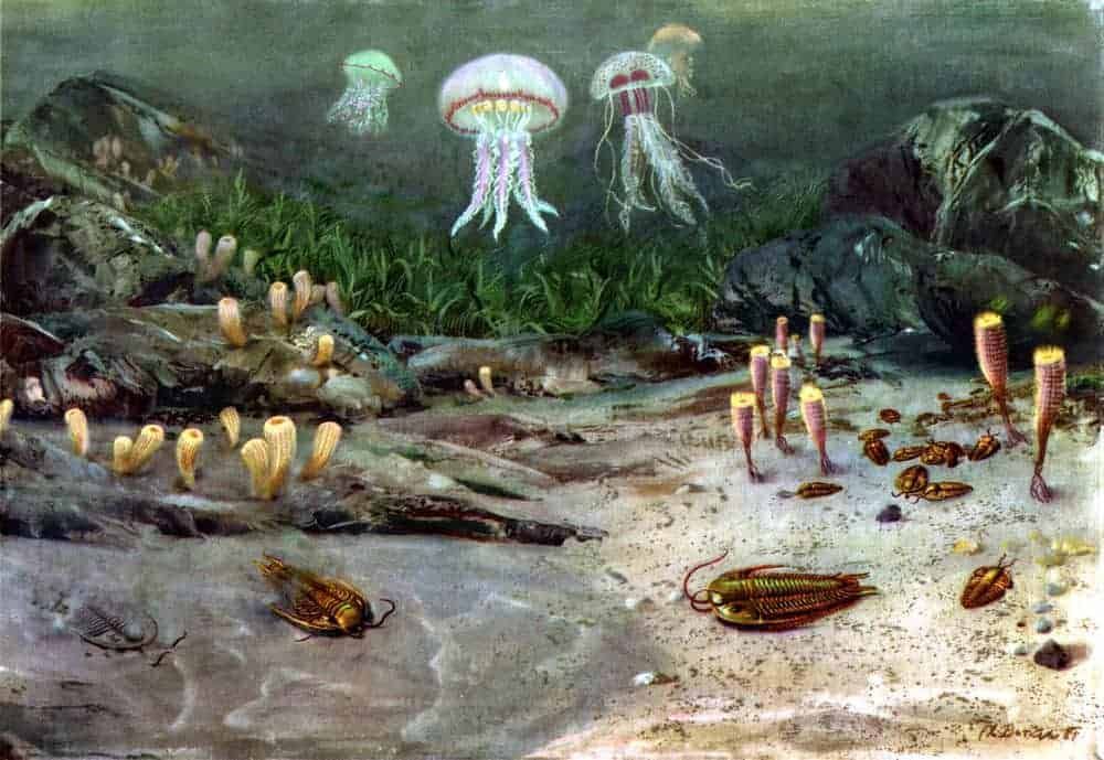 Peisaj marin Cambrian