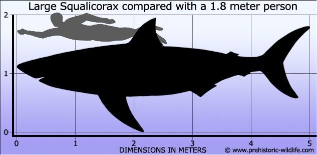 Mărime Squalicorax
