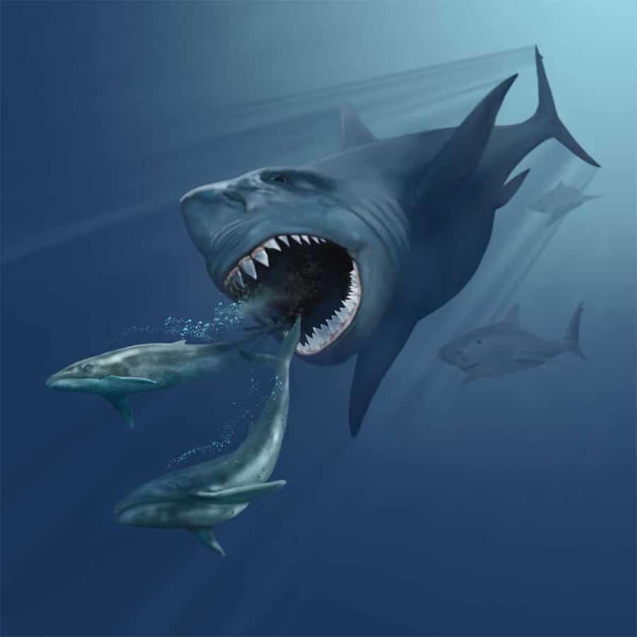 Ilustraţie Megalodon