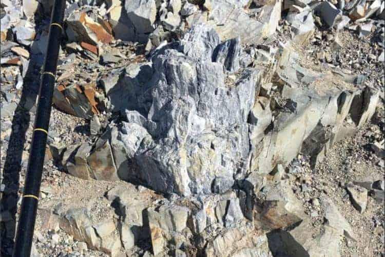 Padure fosilizata Antarctica