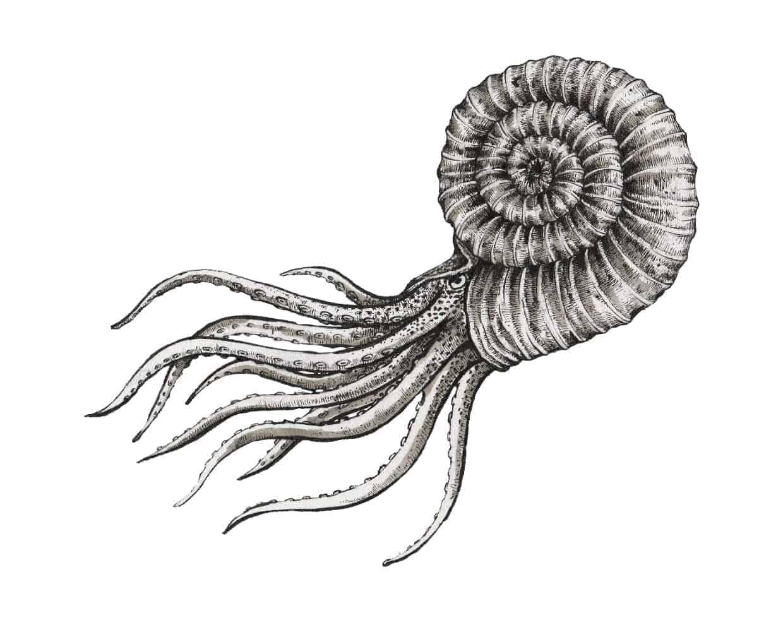 Ilustrație amonit