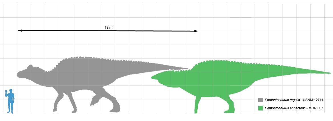 DimensiuniEdmontozaur