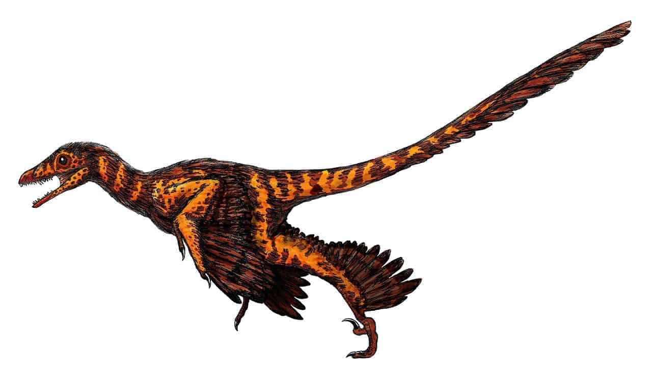 Ilustraţie Sinornithosaurus