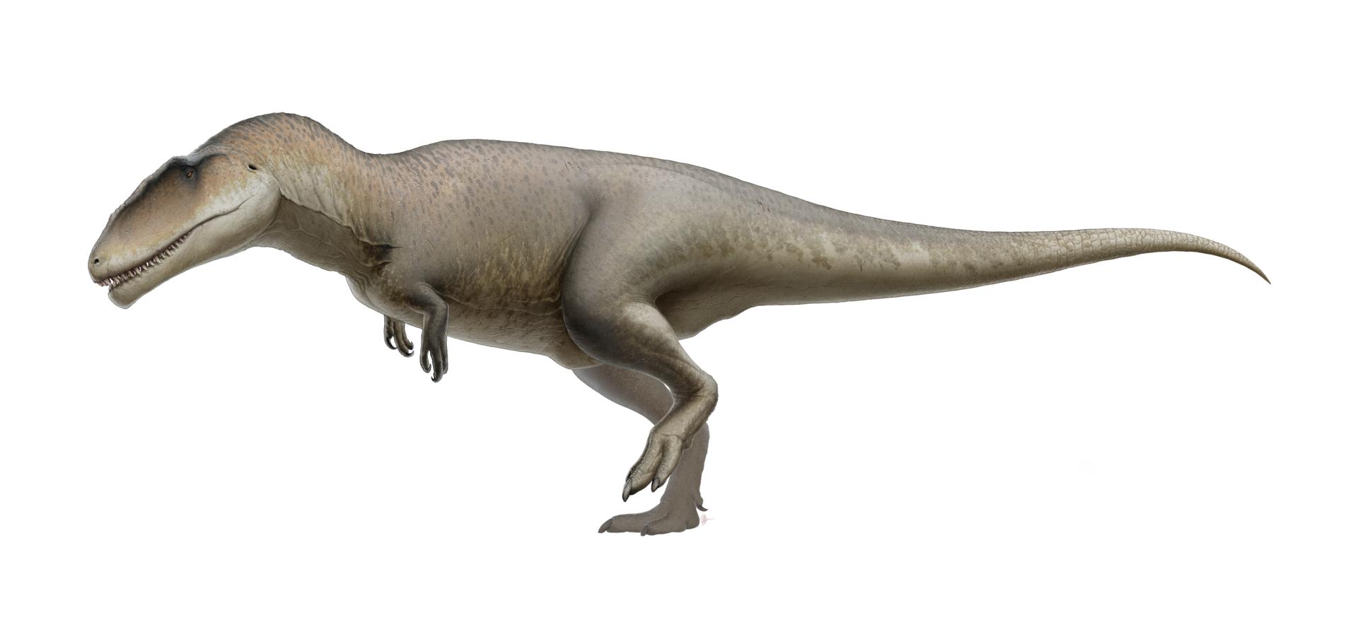 Ilustraţie Carcharodontozaur
