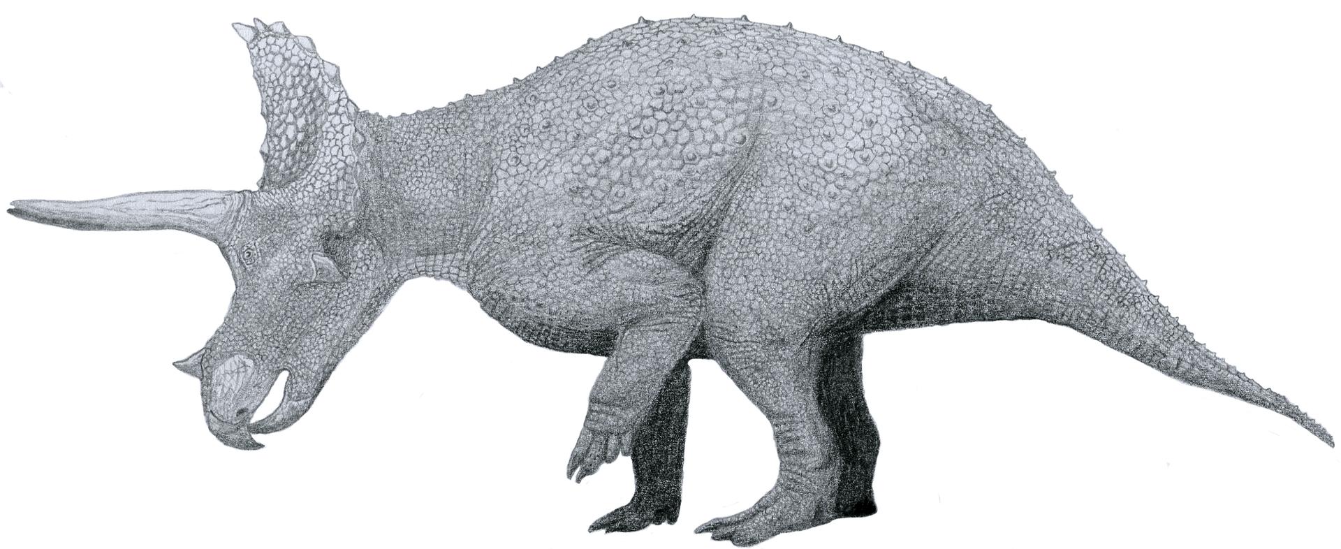 Ilustraţie Triceratops