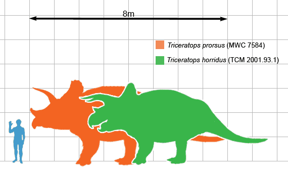 Mărimea unui Triceratops