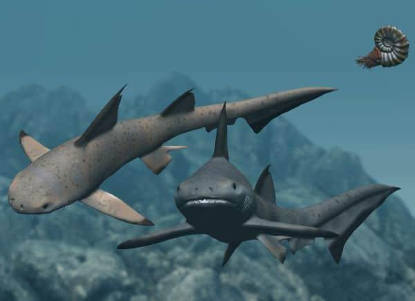 Ilustrație rechin Hybodus
